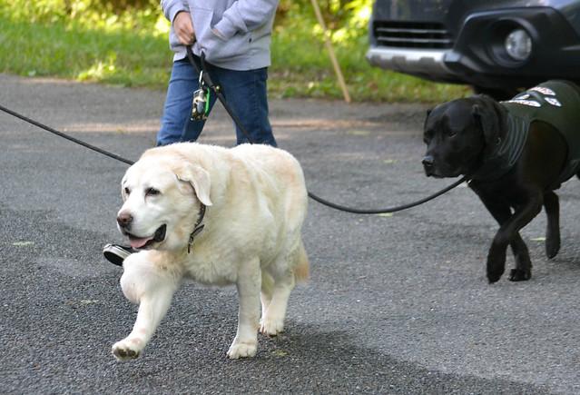2016 Dog Walk