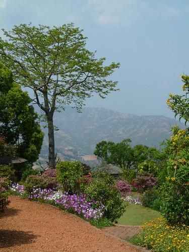 flowers trees nepal dhulikel