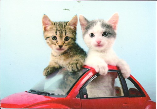 Adorable Kittens in VW Bug