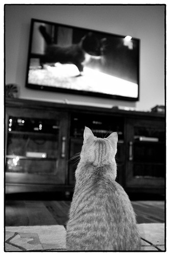 Amelia Watching Animal Planet, March 04, 2012