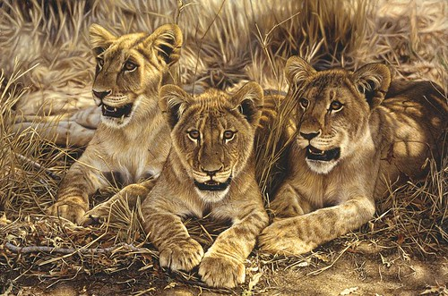 """'African Gold' oil on board 20"""" x 30"""""""