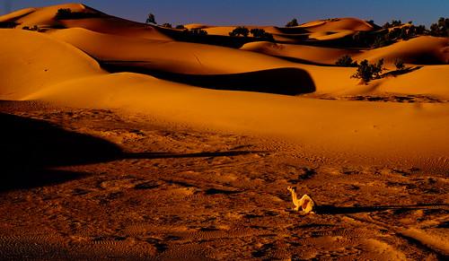 sun sahara dawn sand dune camel morocco rise