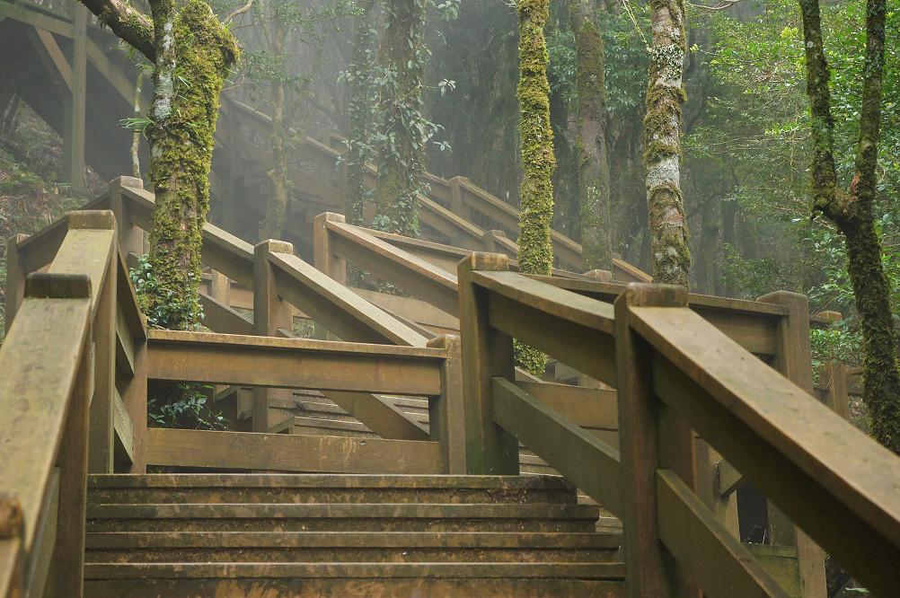 觀霧巨木步道-065