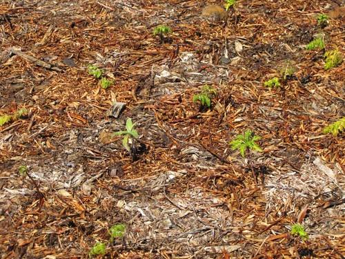 01-Campo de Educação Ambiental do Cabeço da Lenha-21.03.12-1b
