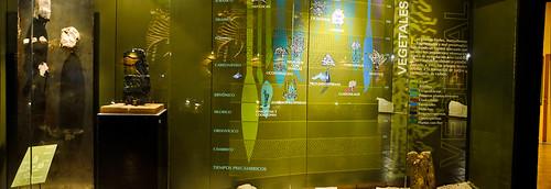 Museo de Paleontología (11)