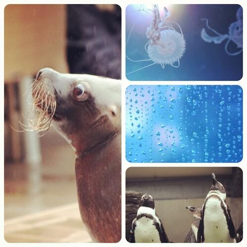 rainy aquarium