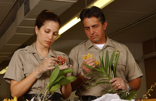 Ensuring cut flowers are free from invasive pests and disease is a joint effort between the USDA and Department of Homeland Security.  Here inspectors examine imported flowers at a Florida Plant Inspection Station run by USDA.