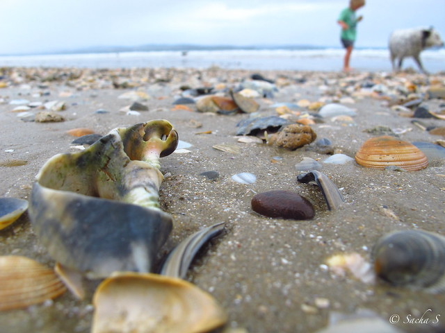 Looking for Shells