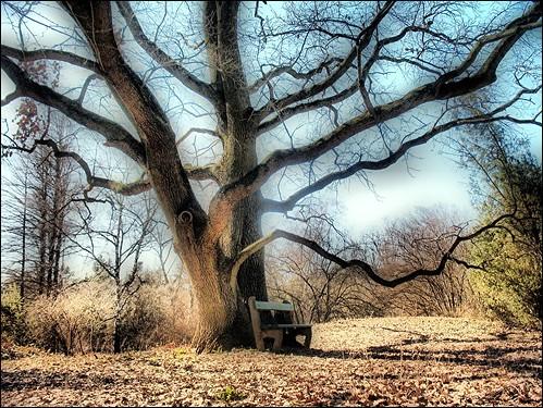 oaktree botanicalgarden debrecen botanikuskert tölgyfa withcanonpowershota620 debotkert debrecenibotanikuskert