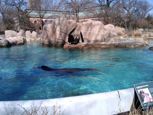 Bronx Zoo: Sea Lions