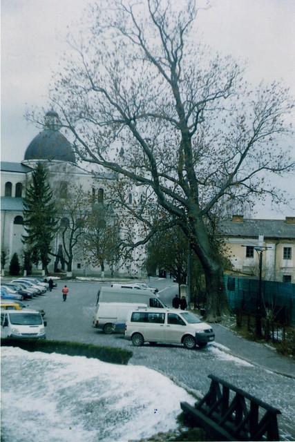 Lesya Tree