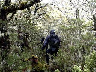 Bush Bashing on Emerald Mountain