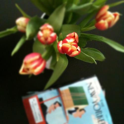 tulips_2