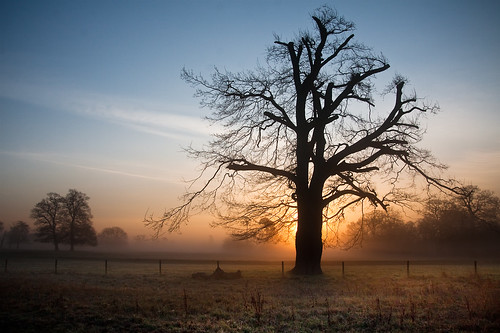 mist tree misty sunrise dawn quiet tranquility slough berkshire kevday tranquil langleypark