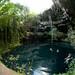 Swimming in Xochempich Cenote - Yucatan, Mexico por uncorneredmarket