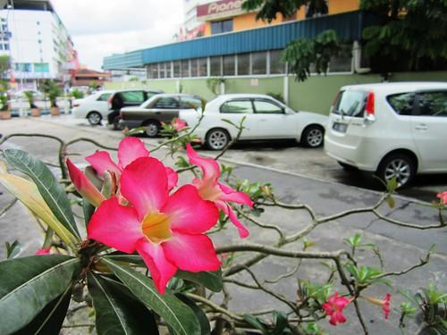 Garden - free parking