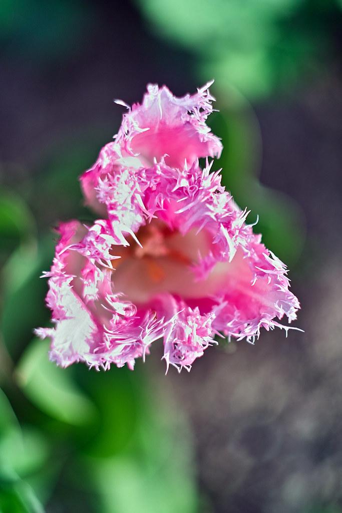 Klammerbeutel Pink