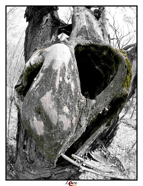 Le peuple de la forêt - Page 4 6987013452_7250d1ac45_z