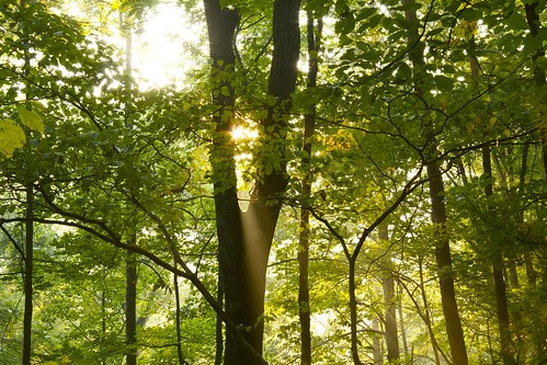 trees forest sunrise raw sunbeam chattahoochee