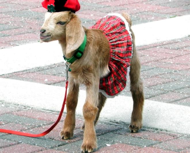 03-17-2012_Irish Lamb