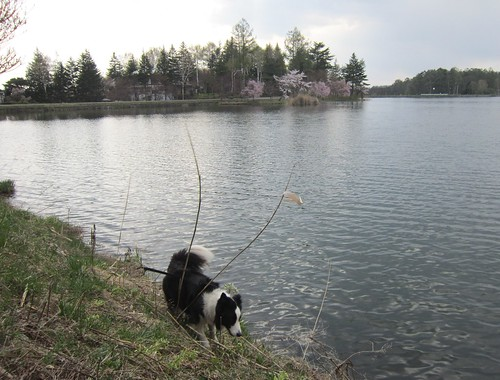 蓼科湖畔のランディ 2012年5月7日15:21 by Poran111