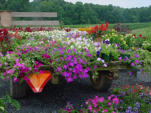 Hanging baskets and bedding plants, Russell's Produce Stand, Clements