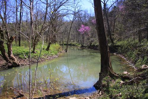 Kentucky Spring Wildflowers 2012