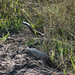 Small photo of A Black Mamba
