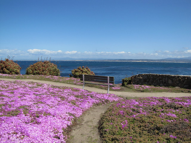 Ice Plant in Pacific Grove, CA