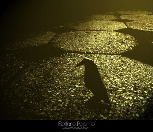 Solitario Palomo by Ivan Pawluk