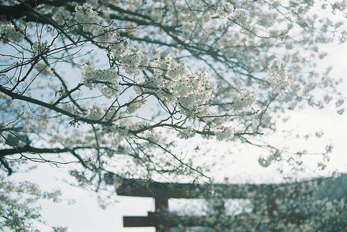 2012 spring kamakura