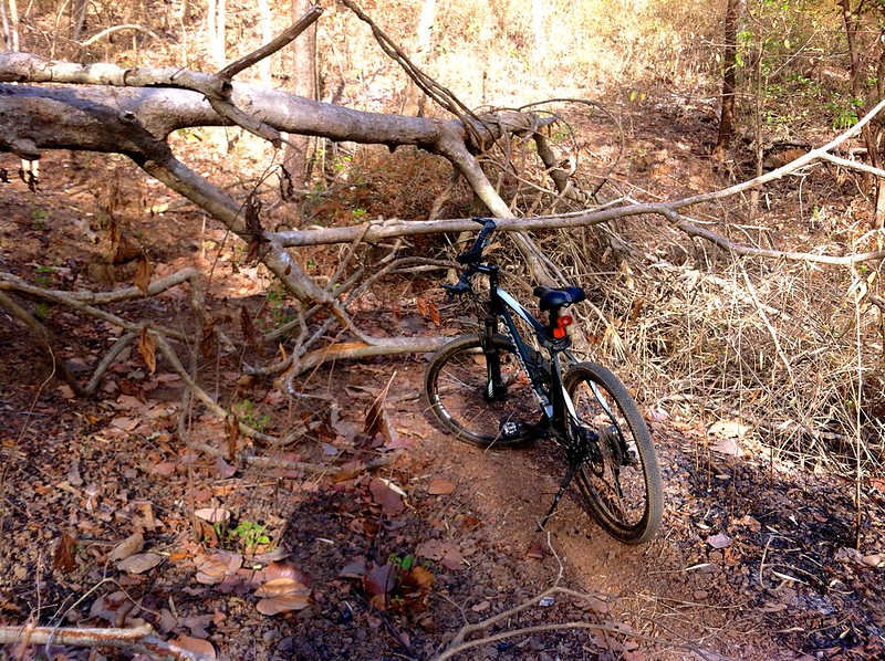 Yeoor Hills Off Road - Fallen tree blocks the path