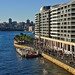 Life on Sydney Harbour Foreshores