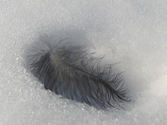 fur(0.0), brown(0.0), wing(0.0), eyelash(0.0), human body(0.0), bird(0.0), eye(0.0), organ(0.0), feather(1.0), close-up(1.0),