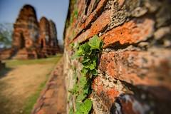 攀附 Climb  ~Ayutthaya 大城,Wat Phra Mahathat~