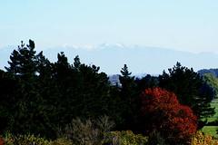 Autumn Trees, Christchurch