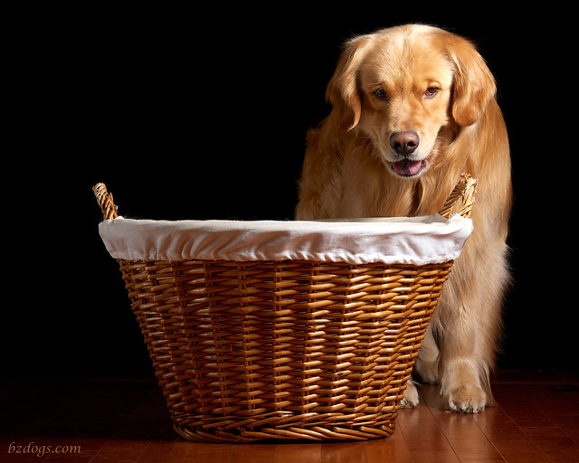 Henry and Basket
