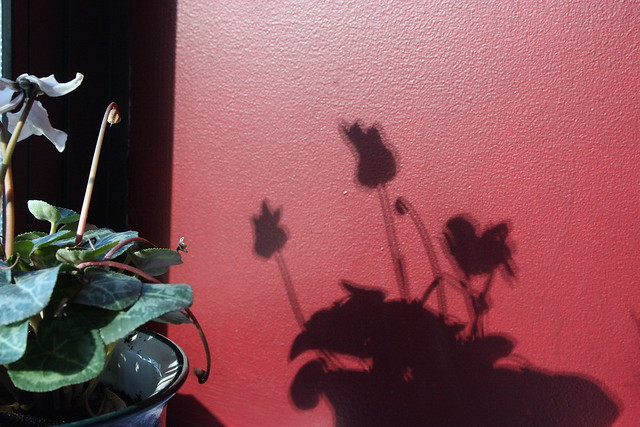 flower shadows