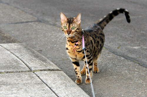 KittyWalk02