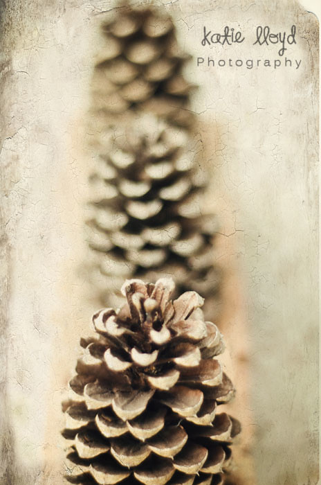 pinecones---wm
