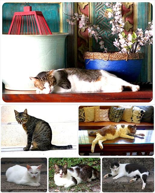 cats at bonton temple tree langkawi