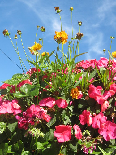 Pink and Yellow Flowers under a Blue Sky