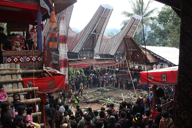 Toraja Death Rituals: Cave Burials, Effigies   and the Walking Dead!