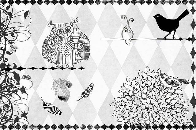 Harlequin Birds