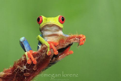 Heliconia Hugger by Megan Lorenz