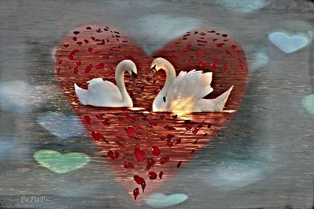 El Amor está en el aire/  Happy Valentine's Day