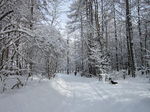 家の前の道路 2012年2月15日9:42 by Poran111