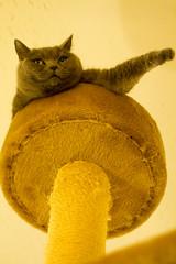 Traffic sign cat