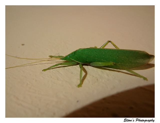 The green insect who came a-visiting