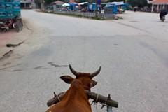 Baie d'Ha Long Terrestre - Ninh Binh - Hoa Lu - 01